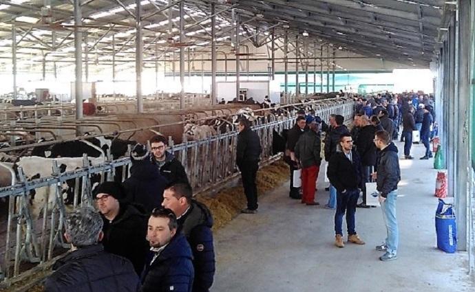 Nuova Stalla Per L'Azienda Agricola Vanzetti Holstein Di Candiolo